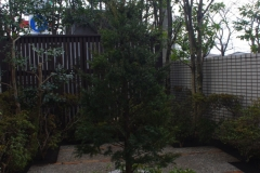 記念樹広場の庭